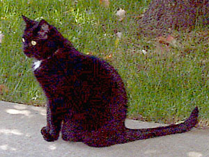 [Tabitha the Cat outside]